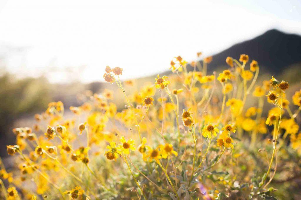 nature - wild flowers