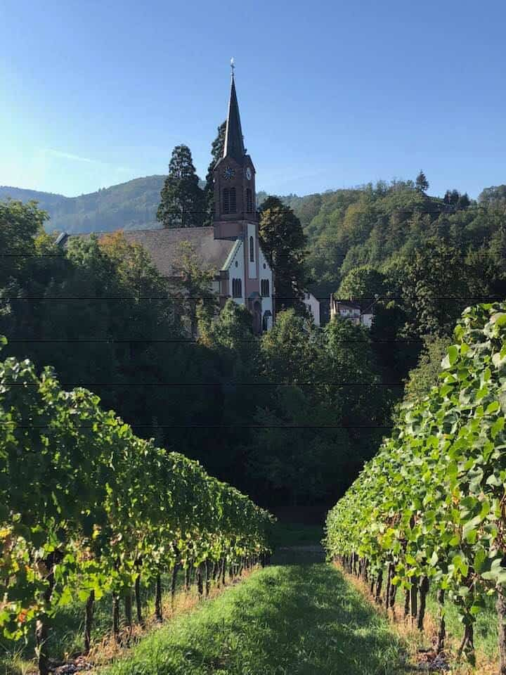 Schwarzwald vineyards