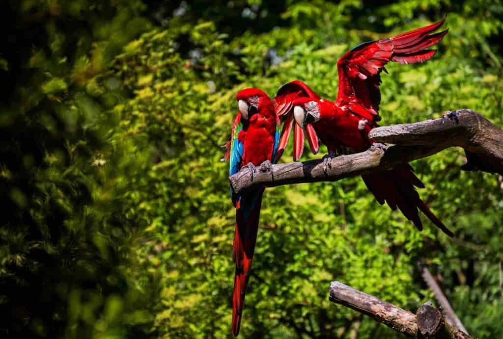Exotic birds at Zurich Zoo