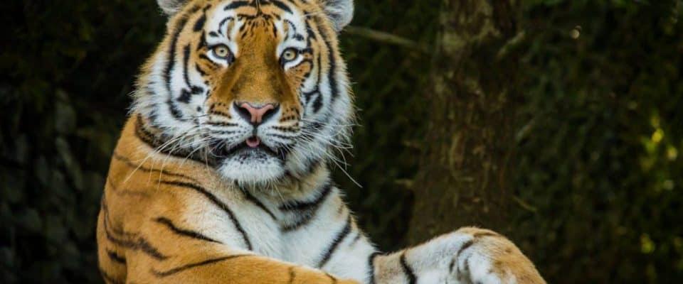 Zurich Zoo - Open 365 Days A Year!