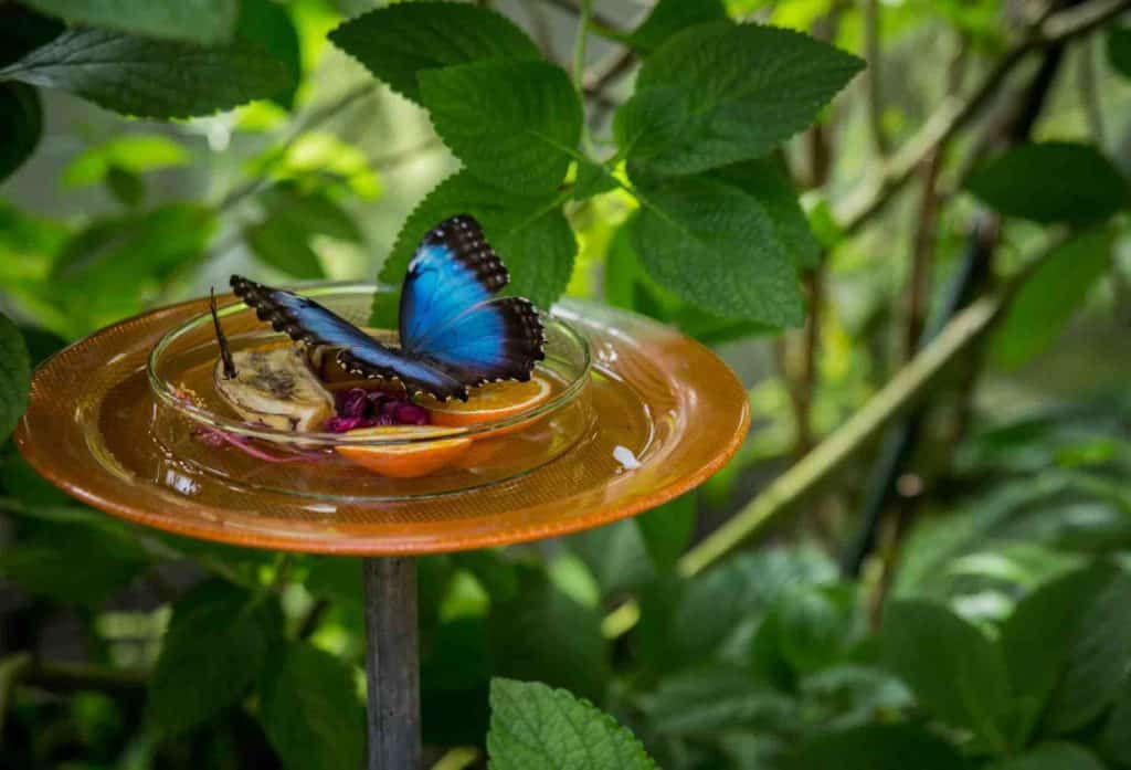Butterflies at The Flower Island of Mainau Germany
