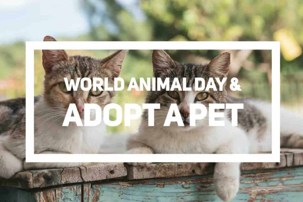 World Animal Day and Adopt A Pet