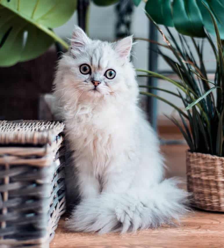 Top Tips On Pets In Switzerland