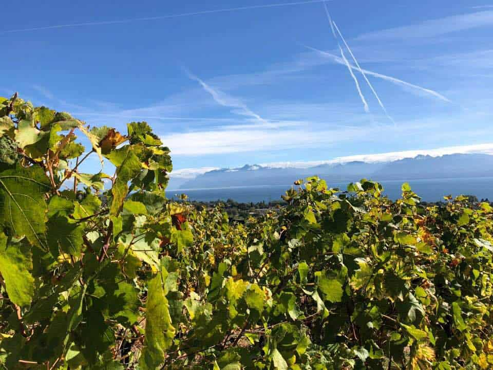 Wine Tasting in The Riviera Vaudoise and the Lavaux Switzerland