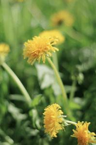 Swiss Meadows and Fields © NewInZurich.com