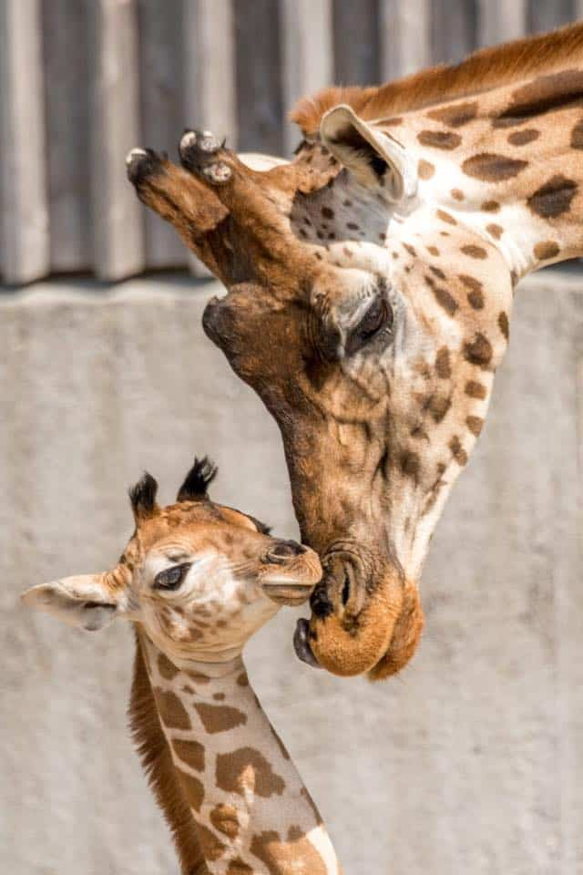 Knie's Children's Zoo Rapperswil