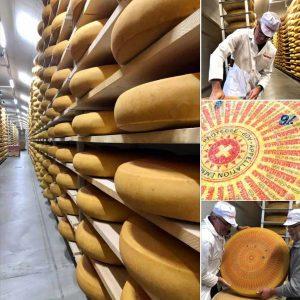 Emmental AOP URTYP Cheese maturing in Switzerland