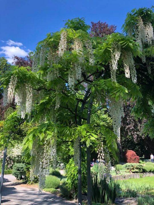 Beautiful Parks to Visit In Zurich - Belvoir Park