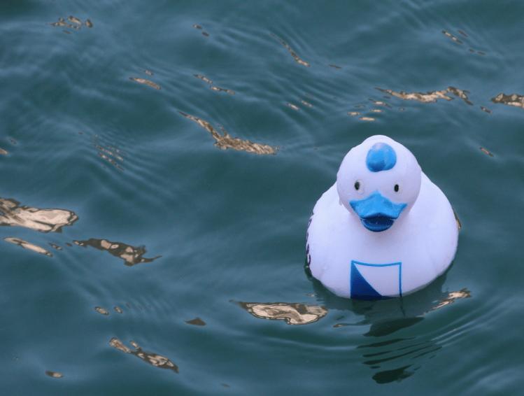 Duck Race 2013 © NewInZurich