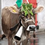 Cow Parades near Zurich