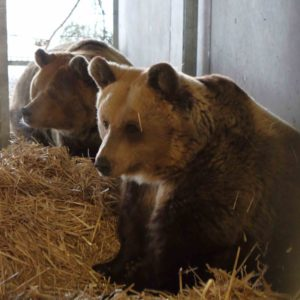 Bärenland Arosa - Bears Rescued By Vier Pfoten in Switzerland