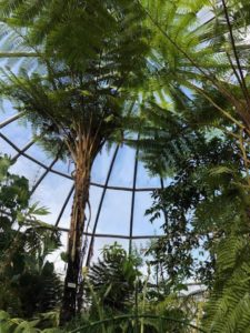 Visiting the Botanical Garden of the University of Zurich