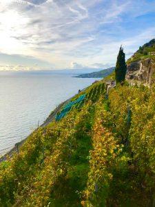 The Lavaux UNESCO World Heritage Vineyards