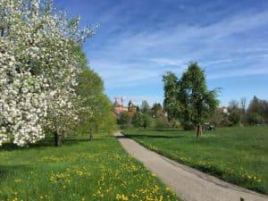 Easy Circular Walk Near Kyburg
