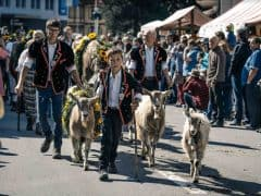 Photos of Entlebuch Alpabfahrt Cow Parade