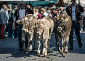 Photos of Entlebuch Alpabfahrt. Alpine cow festival Switzerland