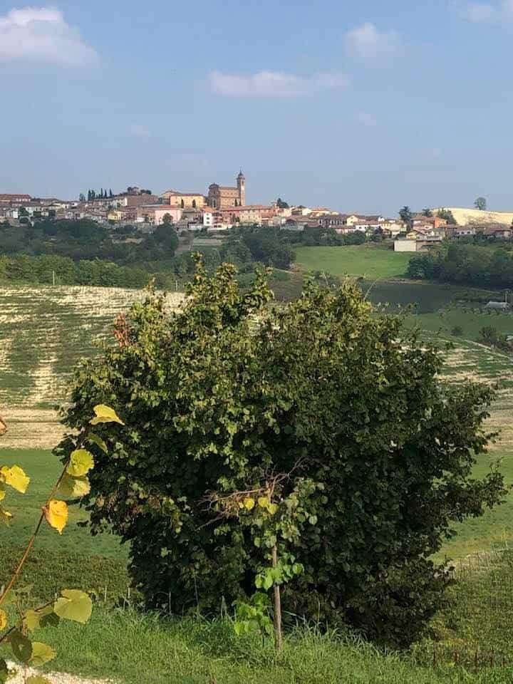 Michele Chiarlo Wines Piedmont italy