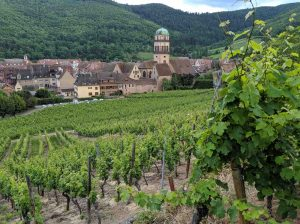 Gourmet Food and Wine in Alsace France