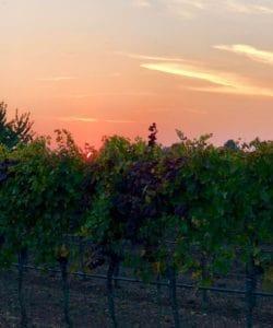 On The Wine Trail at Scheiblhofer Vineyards with Mövenpick
