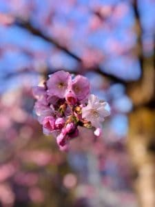 A Little Spring Cheer with the Blossom In Zurich. Spring Blossom