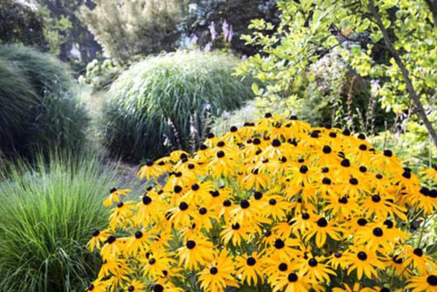 Selectgarten garden services