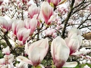 Spring in Zurich