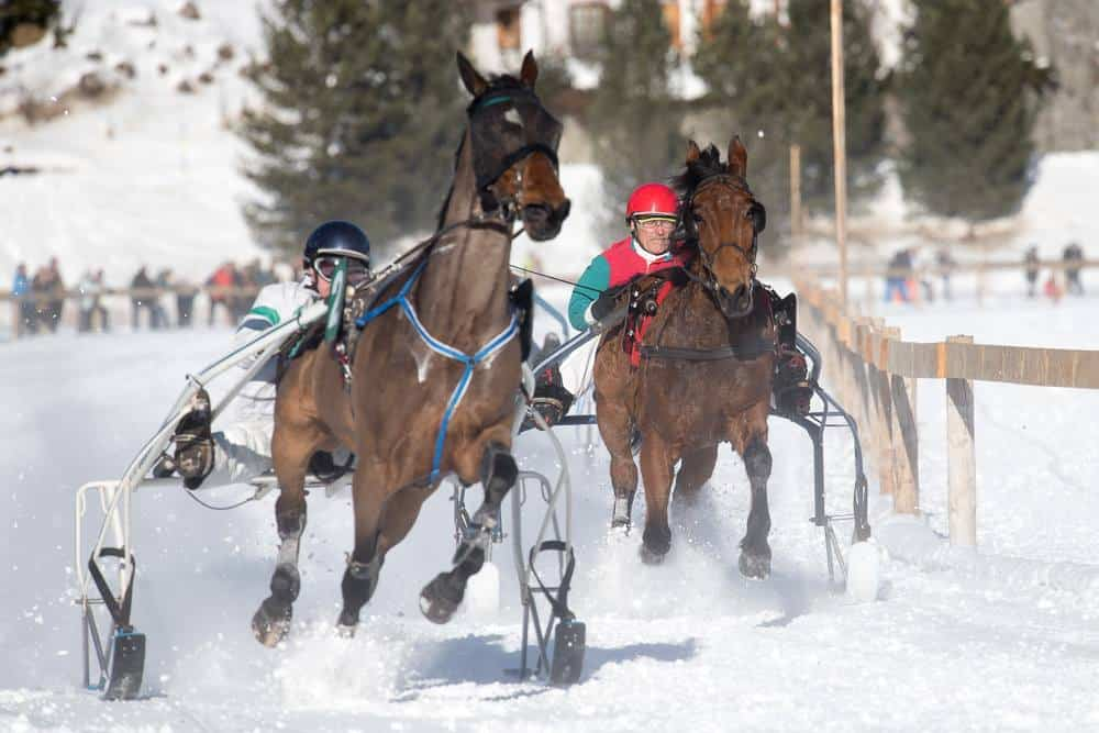 Winter Horse Racing and the Squirrel Trail Arosa Switzerland