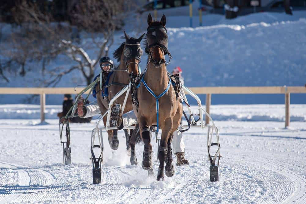 Winter Horse Racing in Arosa Switzerland
