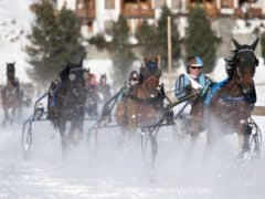 Winter Horse Racing and Squirrel Trail Arosa Switzerland