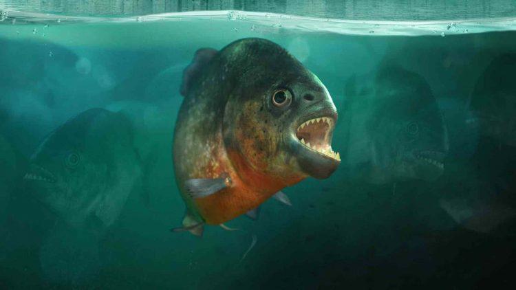 Aquatis Aquarium Lausanne