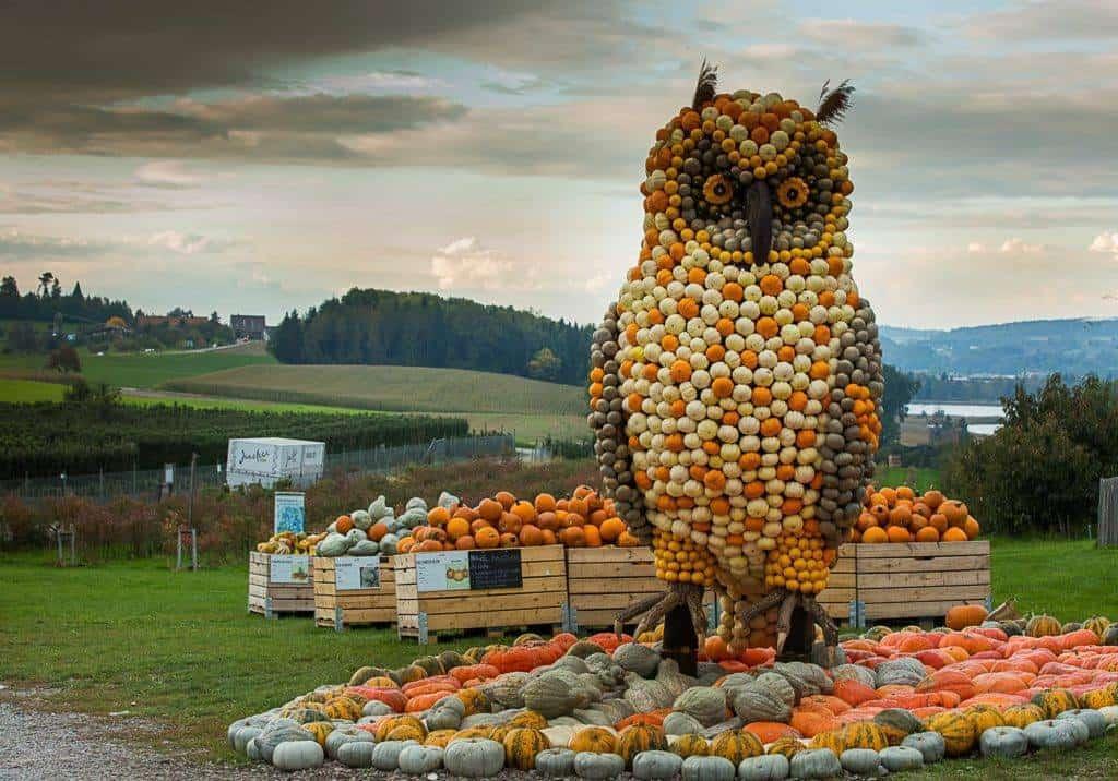 Biggest Pumpkin Exhibition in Switzerland at Jucker Farm