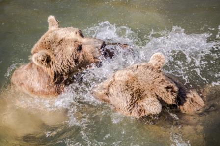 Tierpark Goldau Animal Park