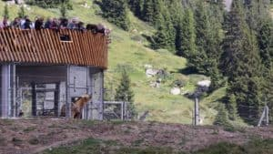 Serbian Bears at the Arosa Bear Sanctuary Switzerland
