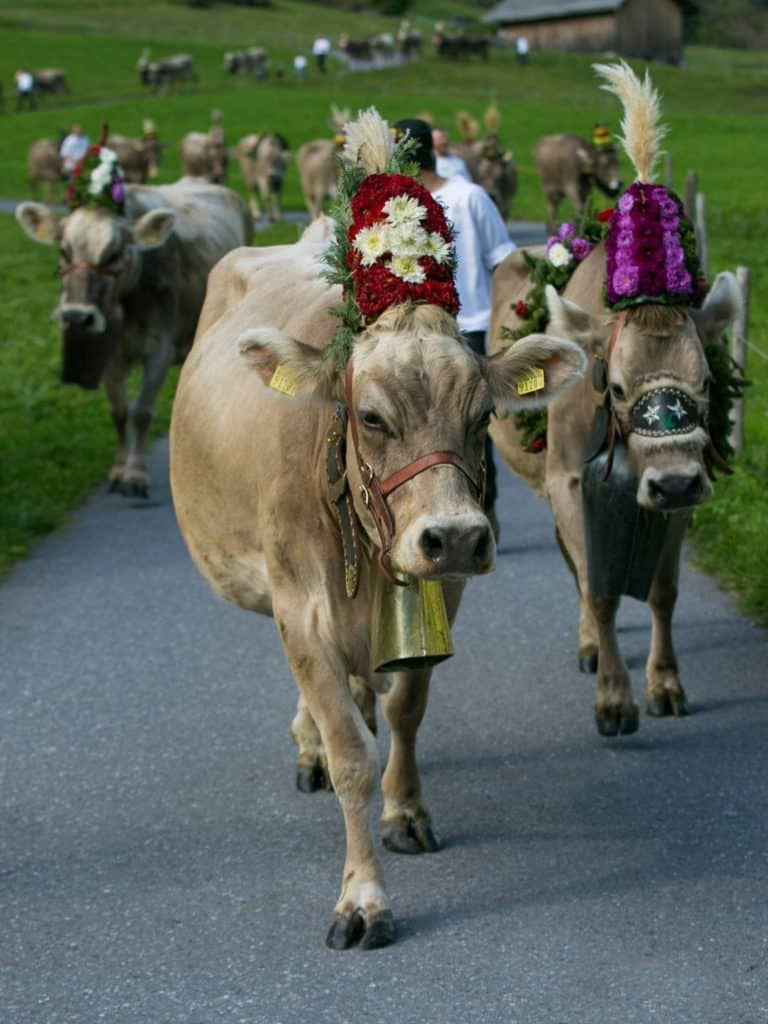 Cow Parade and Cheese Market in Elm Switzerland