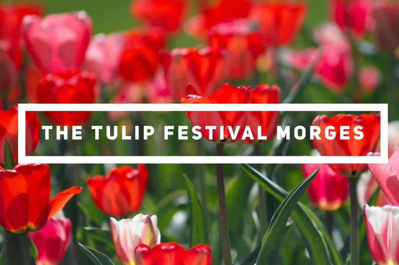 THE TULIP FESTIVAL IN MORGES