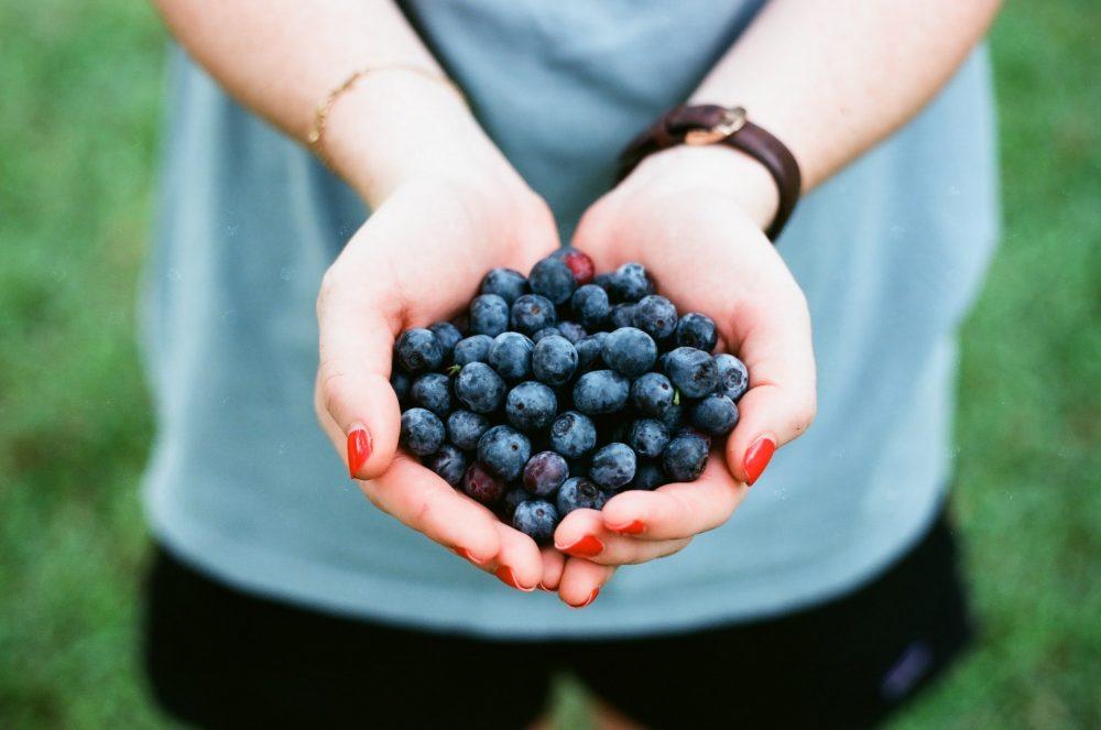 Cherry & Blueberry Picking Near Zurich