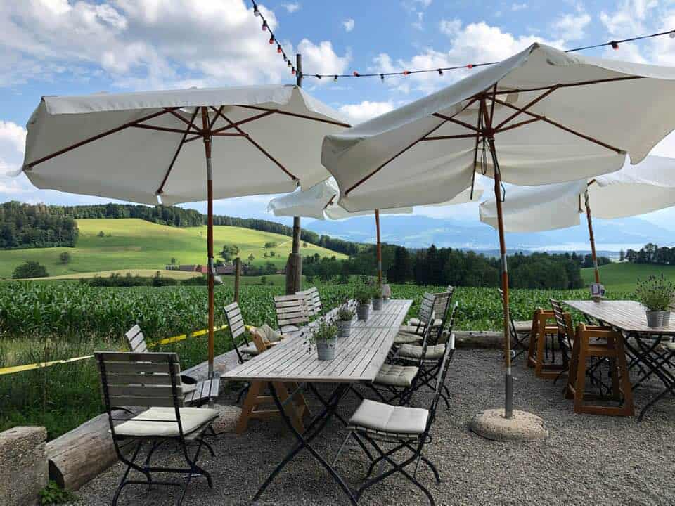 A Delightful Lunch at Albishaus Near Zurich