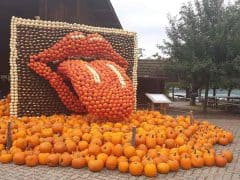 Musical Pumpkin Exhibition at Jucker Farm