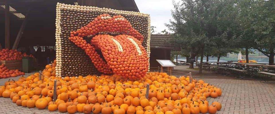 Musical Pumpkin Exhibition at Jucker Farm