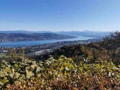 What's On in Zurich Late October 2019