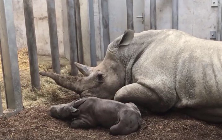 Baby rhino at Zurich Zoo