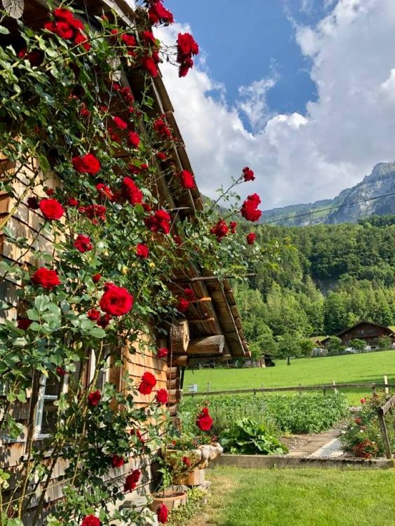 A rose cottage in Iseltwald Lake Brienz