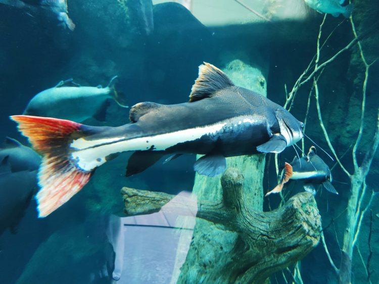 Fish at AQUATIS in Lausanne - Europe's largest Aquarium-Vivarium