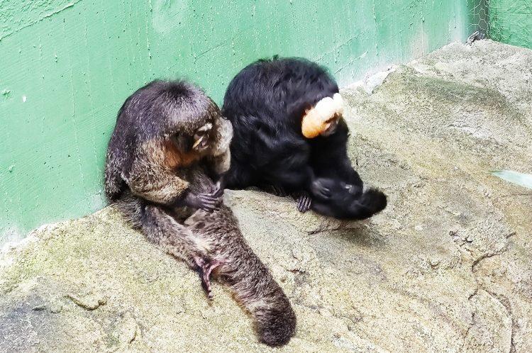 monkeys at AQUATIS in Lausanne - Europe's largest Aquarium-Vivarium