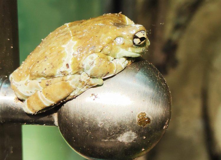 frog at AQUATIS in Lausanne - Europe's largest Aquarium-Vivarium