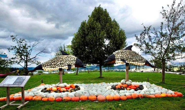 The Fabulous 2020 Jucker Farm Pumpkin Exhibition