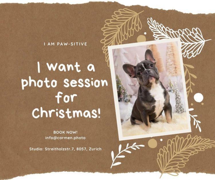 Carmen.photo Dog Portraits