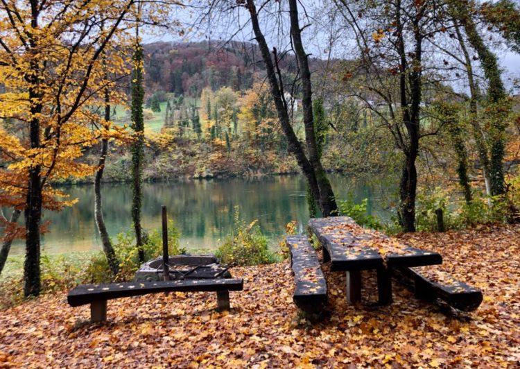 Woods on A Circular Hike Around Eglisau in Autumn