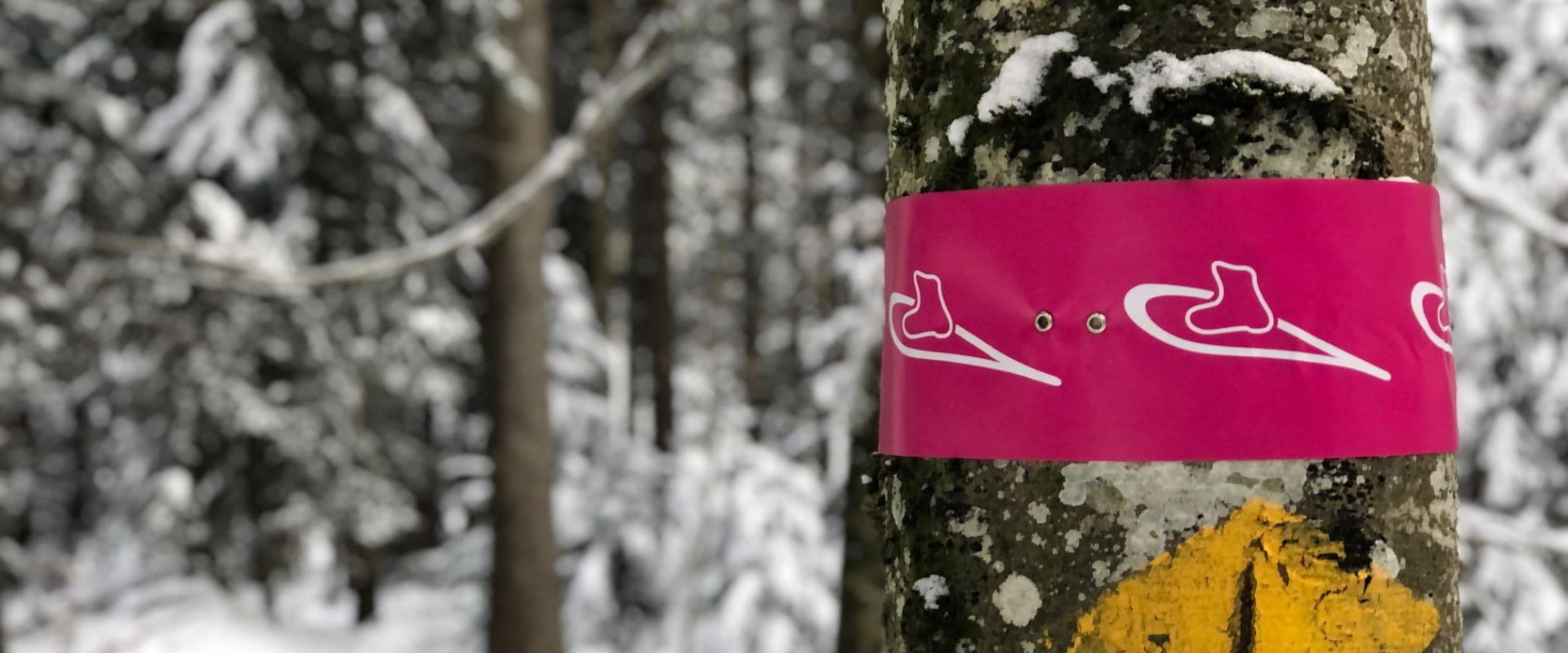 Snowshoeing in Hemberg  – An Accessible Snowshoe Circuit