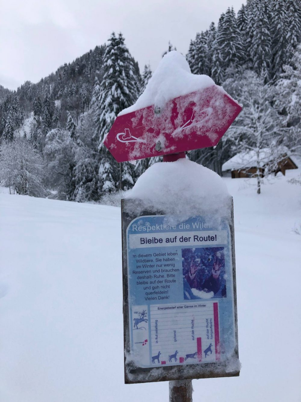 An Easy Snowshoe Hike in Chlosterweid - Not Far From Zurich